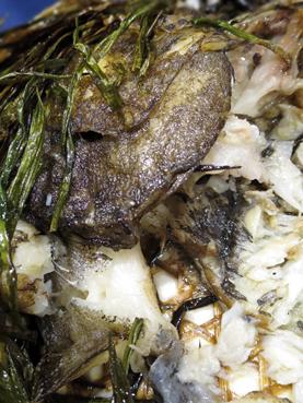 蔥香鴉片魚