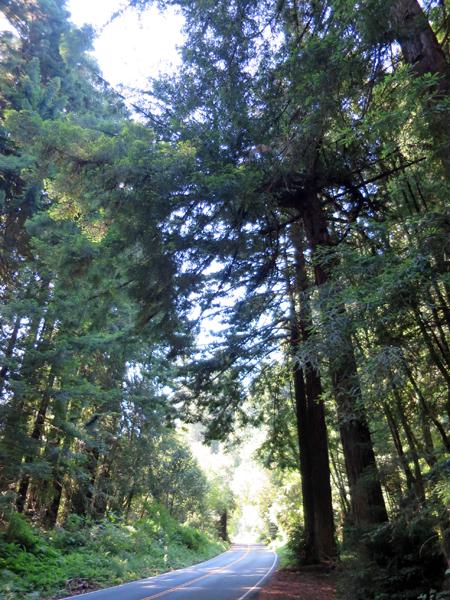 進入紅木林