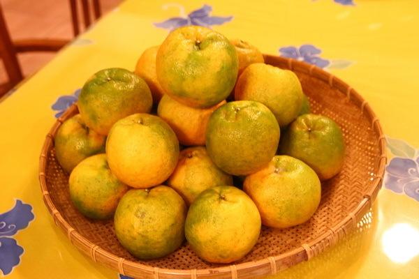 農場主人黃劉振先生親切接待,大方地請我們吃盛產的椪柑。