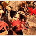 日本东北之旅(五):红叶满吃枫情万种