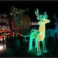 馬車和耶誕燈飾