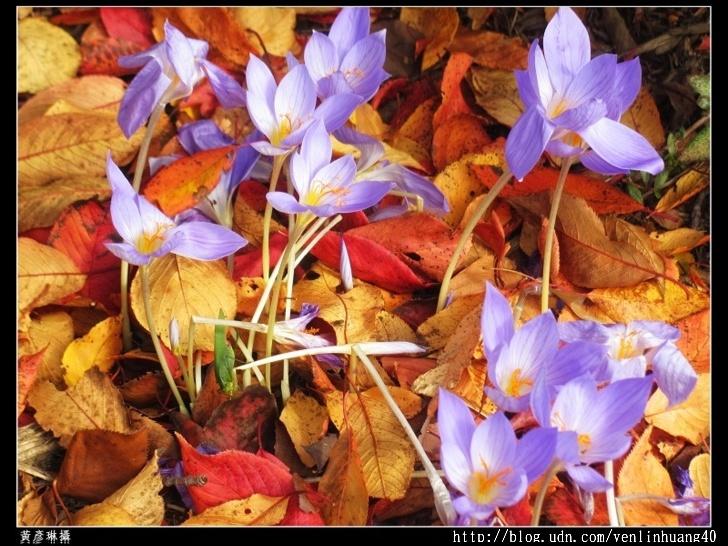 早開的春花