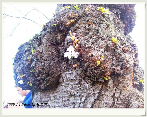 堅強的生命力,不需枝椏也能開花