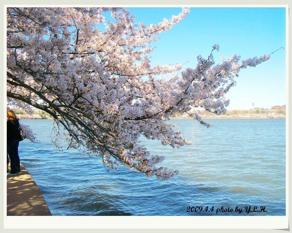 垂到湖面的枝椏,戀戀一池春水