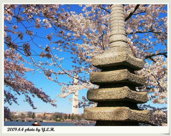 花下的日本塔
