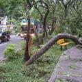 蘇迪勒颱風2015.8.8