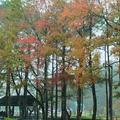 煙雨中走進後慈湖,揆微已久的後花園,開啟神秘的面紗。