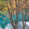 來生若為石願伴九寨水,來生若為樹願生黃龍池