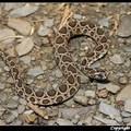 炎熱夏日 小心! 毒蛇出沒~~