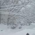 Jan 12, 2011 下了好大一場雪....真是我一輩子沒遇過的大!!! 大家說跟1997 那場有得比! 可是我只記得學校放雪假!