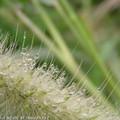 這是什麼植物的花?毛毛蟲花? ^^ 這是