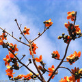4~5月是木棉花展放的季節,大大火紅的花朵,讓整個冰冷的季節都燃燒了起來...