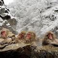 日本長野縣雪猴4