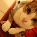 Hola一歲囉~! 轉大貓了 ^___^ 還是很可愛 Hola寶寶最可愛了