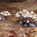 「像不像火鍋裡的金針菇?」只不過是開花了的金針菇