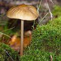 溼度夠又在陰影處,因此在青苔附近總是容易看到野菇