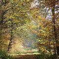 頭一遭走在滿地落葉的森林,也終於聽到秋天的聲音是什麼?  腳下「唏唏唰唰」的正是秋天的聲音