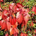 秋天,是什麼味道?什麼顏色?什麼聲音?