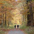 就這樣陪著對方安靜的走著,不需多說話,只消用心傾聽彼此的心。  人生這條路,有你相伴也就不枉這趟。