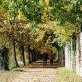 小徑被落葉給舖滿,聽得到的秋天就是腳踩在落葉地毯上的聲音