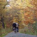 走著作伴、踩鐵馬也是作伴,我羨慕這樣的老夫妻。  走的動時一起走,走不動時就算坐輪椅也一起向前推。