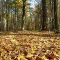 從沒仔細看過落葉,原來落葉的顏色是這麼的多變