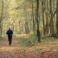 森林裡的慢跑已是讓人羨慕了,而在秋紅時分、葉落滿地的森林裡慢跑更是讓人忌妒