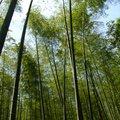 京都嵐山街景04