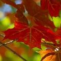 秋的顏色是什麼呢? 從綠轉黃 由黃到紅  秋的代表是蘋果與南瓜 是各種新生動物成熟的季節.... 一蘋換一笑