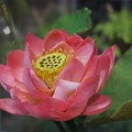 【百年迎春討喜】-花博花兒好可愛 - 2