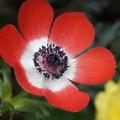 【百年迎春討喜】-花博花兒好可愛 - 3