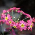 【百年迎春討喜】-花博花兒好可愛 - 4