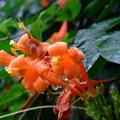 花之美,在於不同情境下,也讓人有豐富的聯想!雨後的鮮花,被晶瑩的水珠襯托著,又是另一種美態。