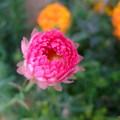愛花惜花在此尋