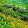 台灣東部有好山好水~號稱台灣後花園 收集些~美美的相片 娛人自娛