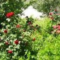 在Valeyasr的花園,花花,果果,還有留在記憶裏的夢