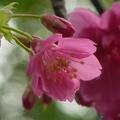 春天是歌唱的季節; 春天是吟詩的季節; 捕捉春天最美的時光