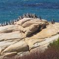 見過野生自由自在的企鵝嗎?南半球的非洲大陸-南非的好望角附近有好多好多的小企鵝喔!