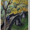 拱北殿的範圍並不很大,除了前山、停車場、正殿外,後山還有一條步道,讓我們隨著楓的腳步,遍尋她的芳蹤吧!
