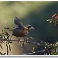 大雪山的豐沛鳥況,在鳥會及攝影界素負盛名,提起23 k、23.5 k、47 k…這幾個數字,常為識者津津樂道。