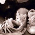 那時他和運動鞋一樣大小