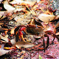 螃蟹跑到十多公尺高的海邊公園來,我和這些小可愛的動物打照面,讓他們瞧瞧我的台灣臉。