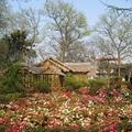 2011年春天的蘇州