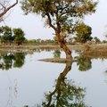 羅布泊湖畔的胡楊木