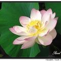 愛花成癡  用相機記錄下曾在我家花園裡露臉的花卉植樹及不速之訪客
