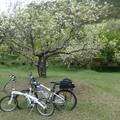 春日遊武陵