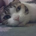 這就是我們家那隻幸福的小笨貓