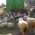 2011農曆春遊-日月潭、清境農場 - 29