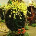"""收集""""台北國際花卉博覽會""""園區從2010.9.28開始的照片記錄"""