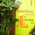鳳梨科植物展。